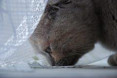 обнюхивать киски пола Стоковые Фото