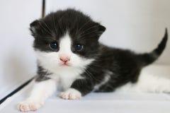 Обожая кот Стоковые Изображения RF
