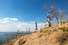 Обожженные намертво деревья на взгляде Butte озера над озером Йеллоустон в национальном парке Йеллоустона в Вайоминге Стоковая Фотография RF