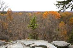 Обозите листьев осени на уступах Ritchie в северном Огайо стоковое фото rf