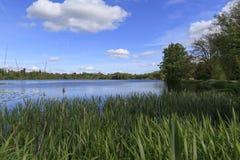 Обозревать Reeds в простое Стоковое Изображение RF