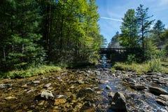 Обозревая длинный резервуар сосны в лесе положения Michaux, Pennsyl стоковые изображения rf