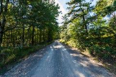 Обозревая длинный резервуар сосны в лесе положения Michaux, Pennsyl стоковые фото