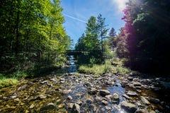 Обозревая длинный резервуар сосны в лесе положения Michaux, Pennsyl стоковое фото rf