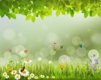 Обои в реальном маштабе времени зеленой весны Стоковое Изображение