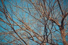 Обои и предпосылка леса дерева Стоковые Изображения RF