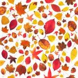 Обои листьев Стоковое Изображение
