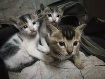 обои персика котят дома предпосылки стоковое фото