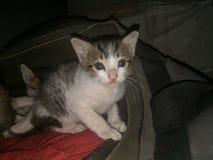обои персика котят дома предпосылки стоковая фотография rf