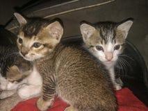 обои персика котят дома предпосылки стоковые фото