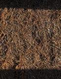 Обои сосны стоковое изображение rf