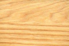 Обои текстуры дерева бука Стоковые Фото