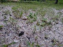 Обои травы засорителя ландшафта Стоковое Фото