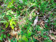 Обои травы Стоковая Фотография RF
