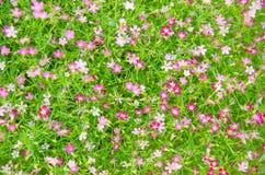 обои цветка Стоковые Фотографии RF