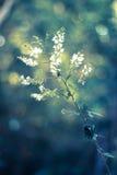 обои цветка Стоковое Изображение