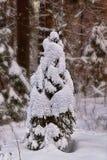 Оборачивают ель вверх с снегом Стоковые Изображения RF