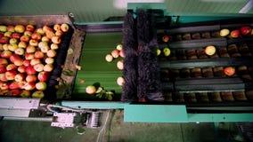 Оборудование в фабрике для мыть, сушить и сортировать яблока производственные объекты промышленного производства в пищевой промыш сток-видео