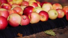 Оборудование в фабрике для мыть, сушить и сортировать яблока производственные объекты промышленного производства в пищевой промыш акции видеоматериалы