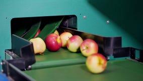 Оборудование в фабрике для сушить и сортировать яблока производственные объекты промышленного производства в пищевой промышленнос сток-видео
