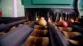 Оборудование в фабрике для сушить и сортировать яблока производственные объекты промышленного производства в пищевой промышленнос видеоматериал