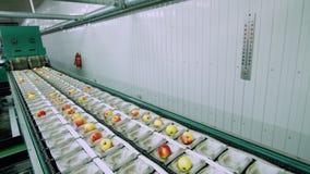 Оборудование в фабрике для сушить и сортировать яблока производственные объекты промышленного производства в пищевой промышленнос акции видеоматериалы