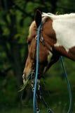 Обочина whit лошади стоковая фотография rf