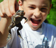 Ободрение жабы Стоковое Фото