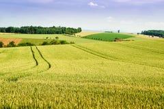 Обрабатываемая земля в Верхней Австрии Стоковая Фотография RF
