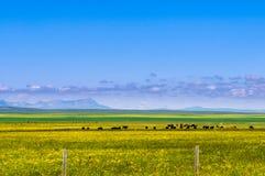 Обрабатываемая земля Альберты Стоковая Фотография