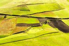 Обрабатываемая земля в Андах Стоковые Изображения