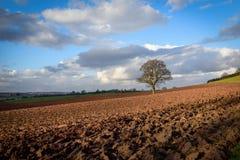 Обрабатываемая земля в зиме Ноттингемшире, Великобритании Стоковое Фото