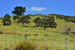 Обрабатываемая земля в сельской местности Новой Зеландии Стоковое фото RF