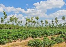Обрабатываемая земля в Таиланде стоковые изображения