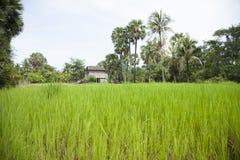 Обрабатываемая земля, Камбоджа Стоковое Изображение