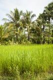 Обрабатываемая земля, Камбоджа Стоковые Изображения RF