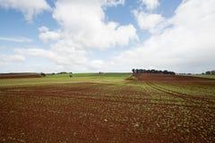 Обрабатываемая земля накидки таблицы Стоковые Фотографии RF