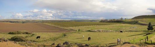 Обрабатываемая земля на панораме Maryhill Вашингтона Стоковые Изображения RF
