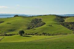 Обрабатываемая земля Новая Зеландия Стоковые Фотографии RF