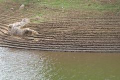 Обрабатываемая земля около реки Стоковые Изображения