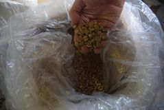 Обрабатываемая индустрия кофе Стоковые Фотографии RF