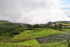 Обрабатывайте землю сад на berk Таиланде ушата Phu горы стоковое фото rf