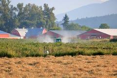 Обрабатывать аграрные заводы с химическим пестицидом стоковые фото