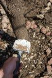 Обрабатывать весны деревьев сада стоковые изображения rf