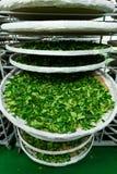 Обрабатывать заквашивания для чая стоковое фото rf