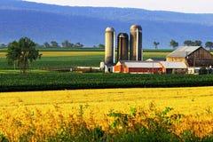 Обрабатывать землю в большой долине стоковые изображения rf