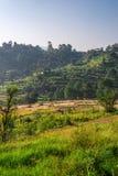 Обрабатывать землю в Гималаях стоковое фото rf