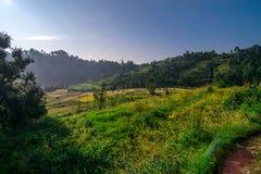Обрабатывать землю в Гималаях стоковые изображения