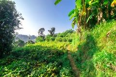 Обрабатывать землю в Гималаях стоковая фотография rf