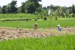 Обрабатывать землю в сельской местности Таиланда Стоковые Изображения RF